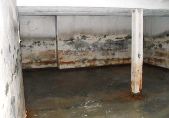 moldy-basement-in-saginaw-mi-48603