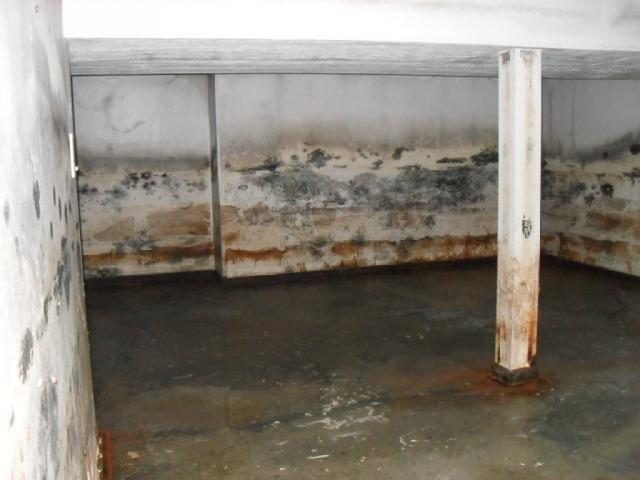 moldy-basement-in-saginaw-mi-48603