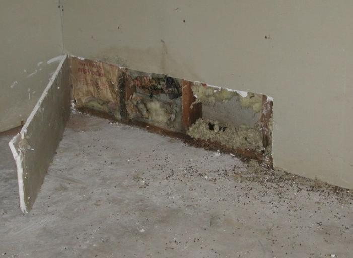 Mold Near Floor | Wyoming, MI | Everdry Michigan